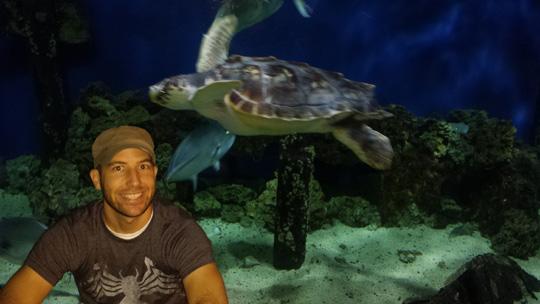 Douglas Ernst turtle 1